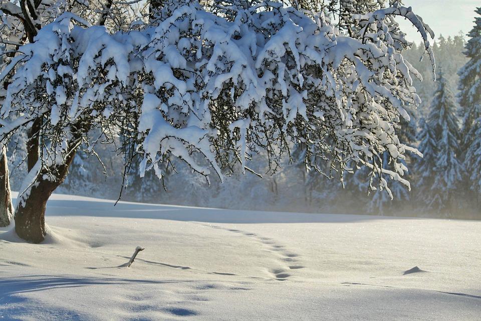winter winterlandschaft schnee kostenloses foto auf pixabay. Black Bedroom Furniture Sets. Home Design Ideas