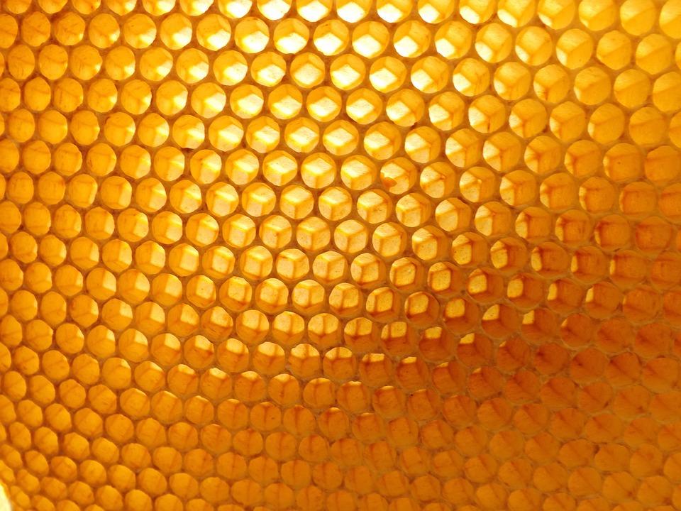 photo gratuite nid dabeille apiculture ruche image