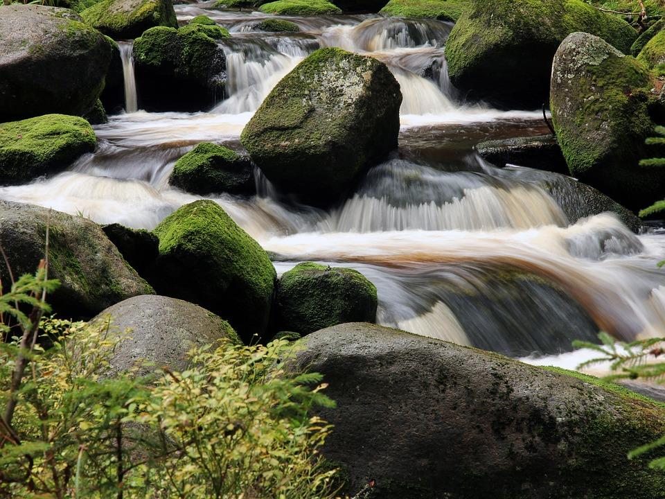 Água, Pedras, Pedra, Corrente, Rio, Floresta, Árvores