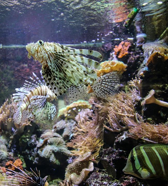 Free photo devil fish aquarium sea ocean free image for Decoration poisson aquarium
