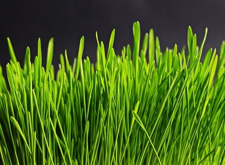 Grass, Green, Nature, Plant, Meadow