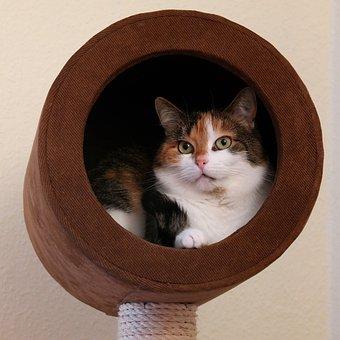 Katze, Tierportrait, Hauskatze