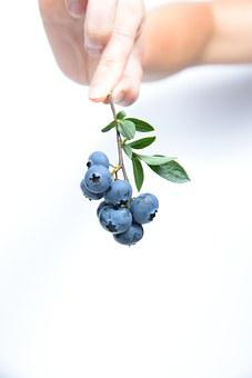 Blueberry, Fruit, Blue, Twig, Food