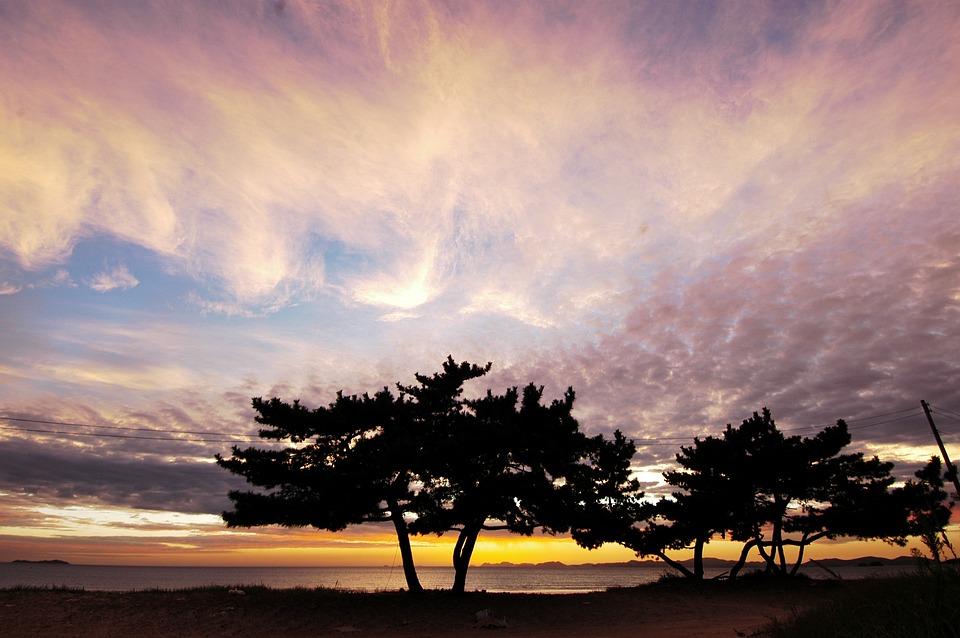 グロー, 韓国, 西海岸, 減退, 日没, 空, に散在の雲, 風景, 海, 松, 海岸, 木