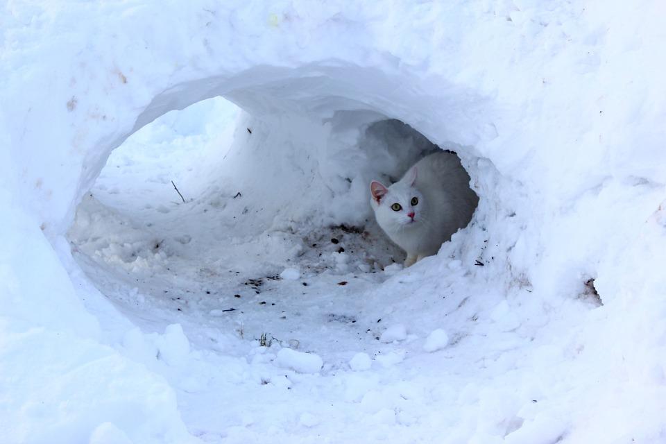 Lumi Laukut Suomi : Ilmaisen valokuvan talvi kissa lumi onkalo suomi
