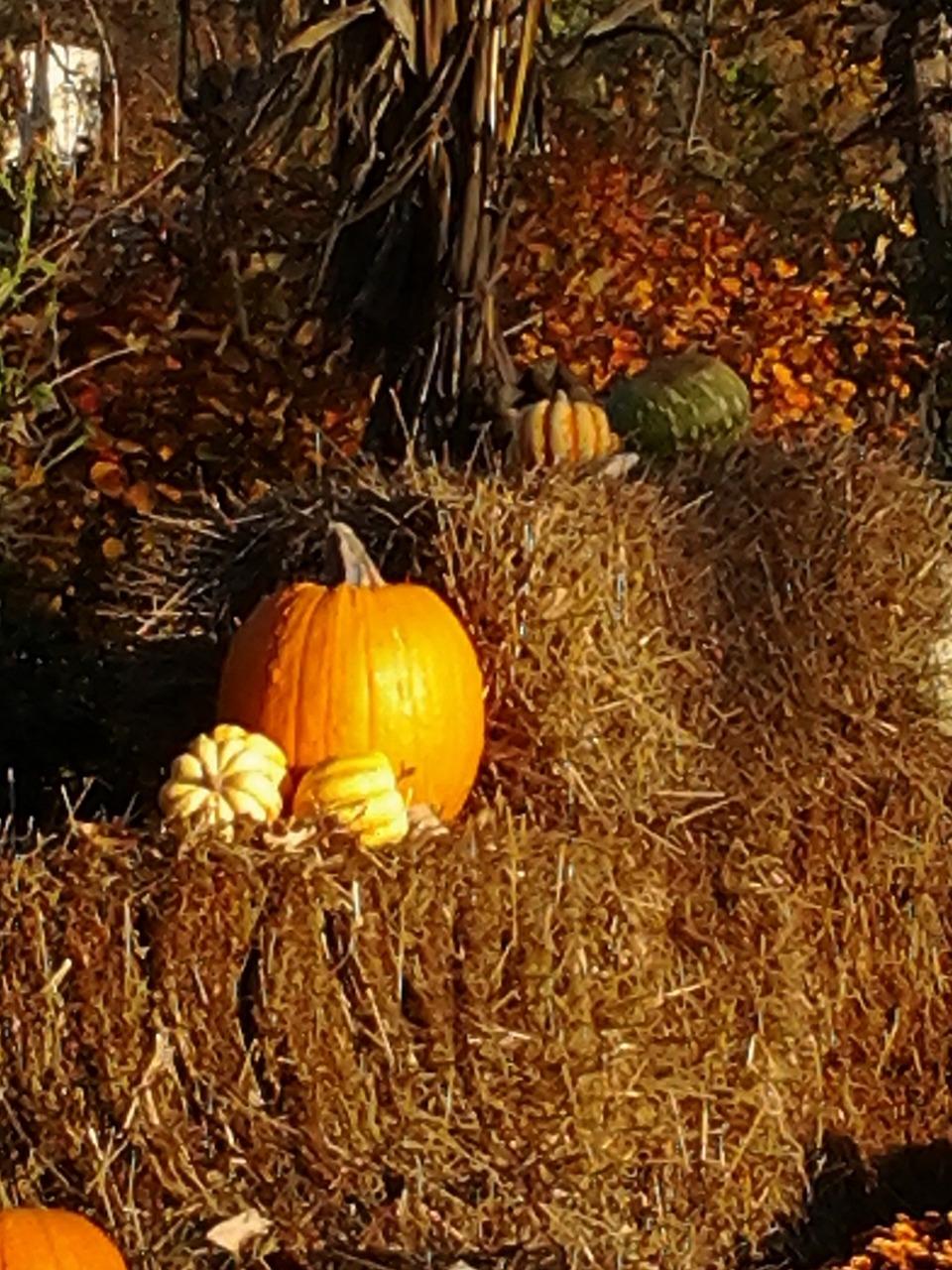 梦到家里秋收到好多王米 梦见家里收了很多小麦