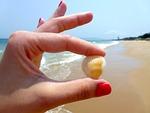 beach, seashell, toenail