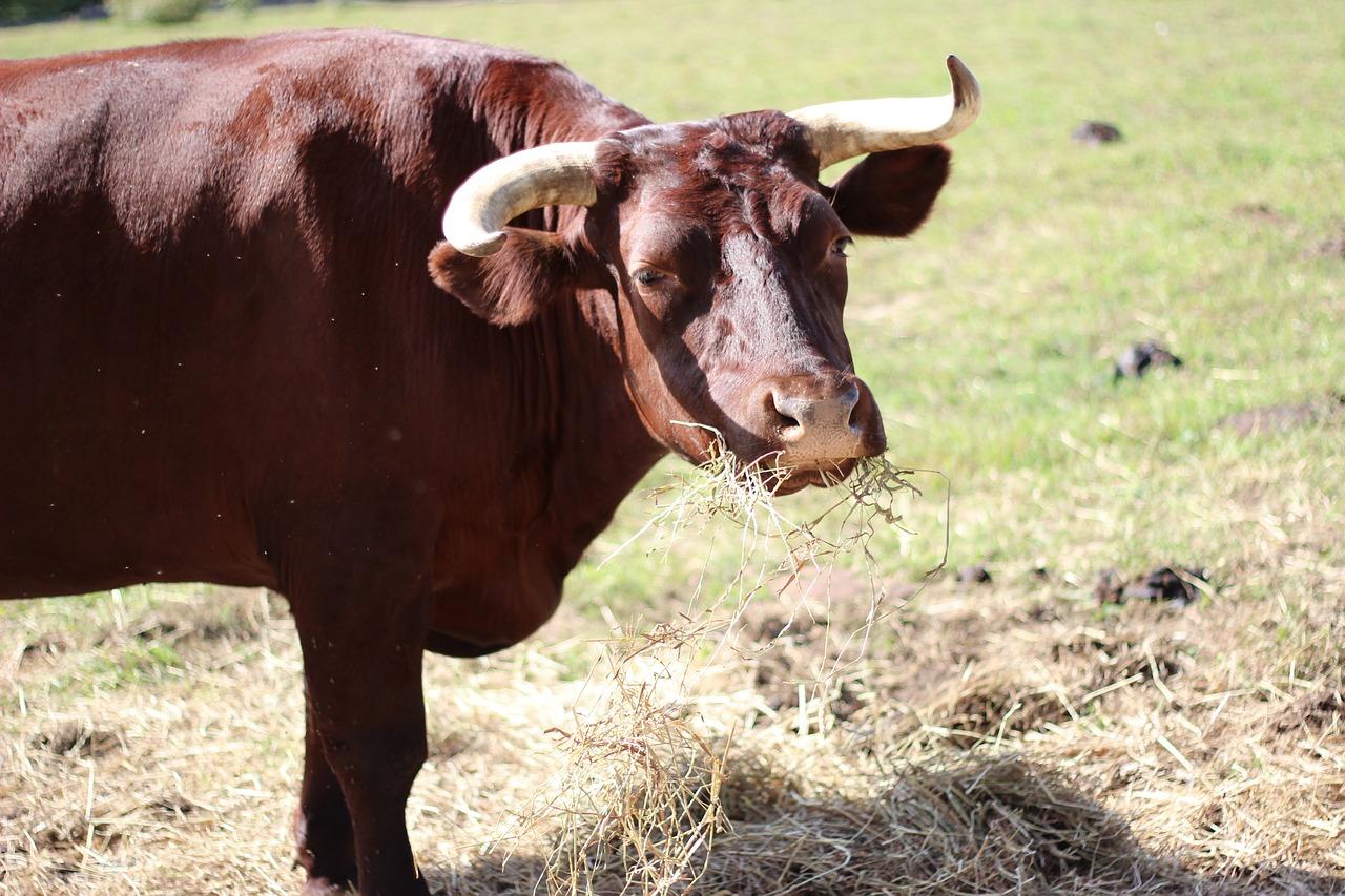 ткань смотреть картинки быков обычно меняете