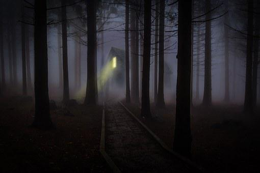 Foggy, Mist, Forest, Trees, Spooky