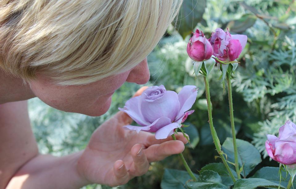 Donna, Persona, Odore, Profumo Di Rose