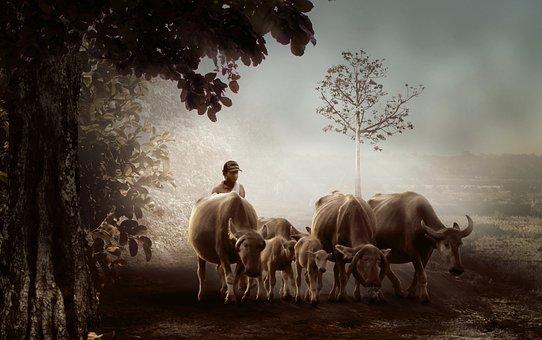 Man, Village, Shepherd, Buffalo, Nature