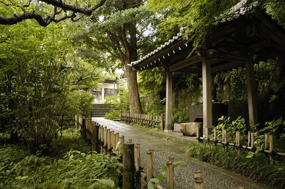 Kamakura, Natural, Temple, Ankokuron-Ji, Plant, Summer