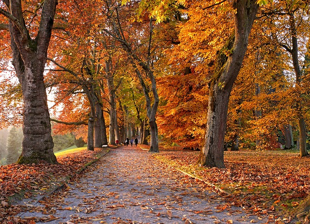 Foto gratis autunno viale alberi immagine gratis su for Immagini autunno hd