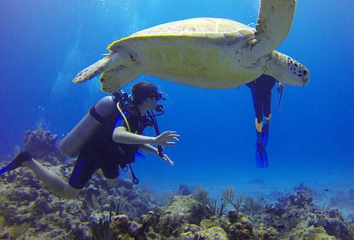 Diver, Turtle, Mexico, Scuba Diving, Sea