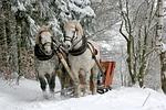 kulig, konie, zima