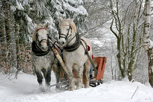 Sleigh Ride, Horses, The Horse, Winter