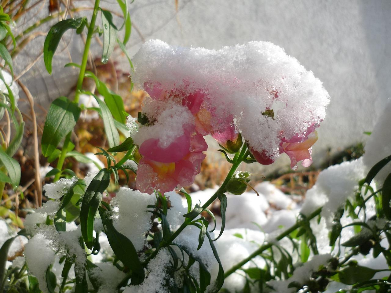зимние цветы названия и фото этот райотдел был