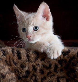 Kätzchen, Katze, Haustier, Tier