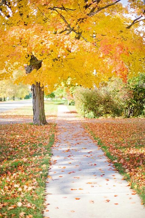 free photo  sidewalk  yellow  tree  walkway