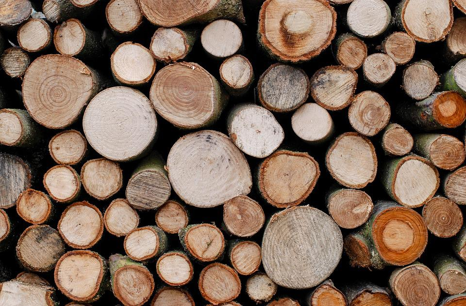 Free photo trees lumber timber wood wooden free for What to make with tree logs