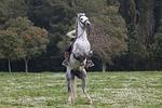 horse, jockey