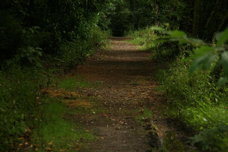 tree path track leaves - photo #17