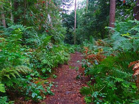 Forest Path, Fern, Forest, Jungle