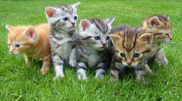 Chatons, Cat, Chiot Chat, Rush, Flottant