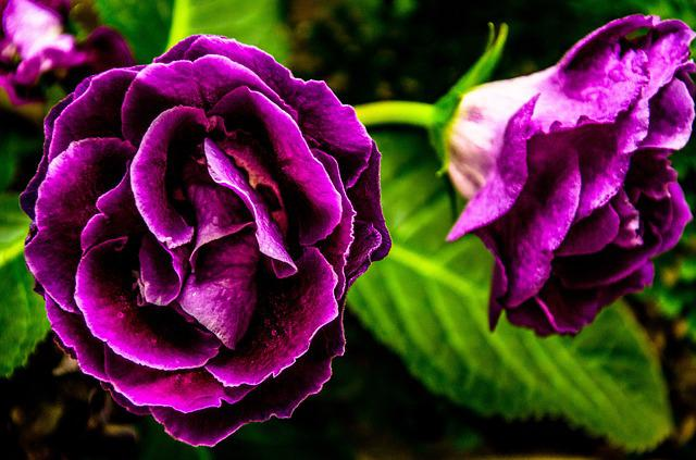 free photo purple flower, flower, purple  free image on pixabay, Natural flower