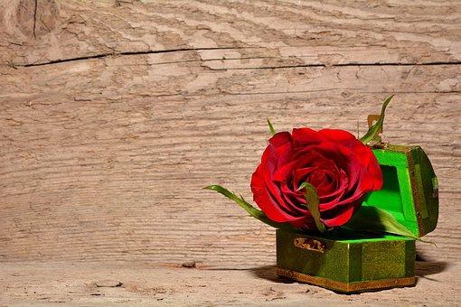 Rosa, Rojo, Flor, Cofre Del Tesoro