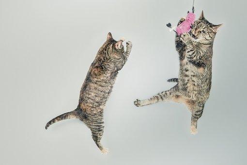 Kucing, Melompat, Bermain, Menyenangkan