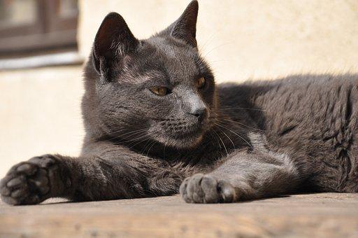 Gato, Atención, Salvaje