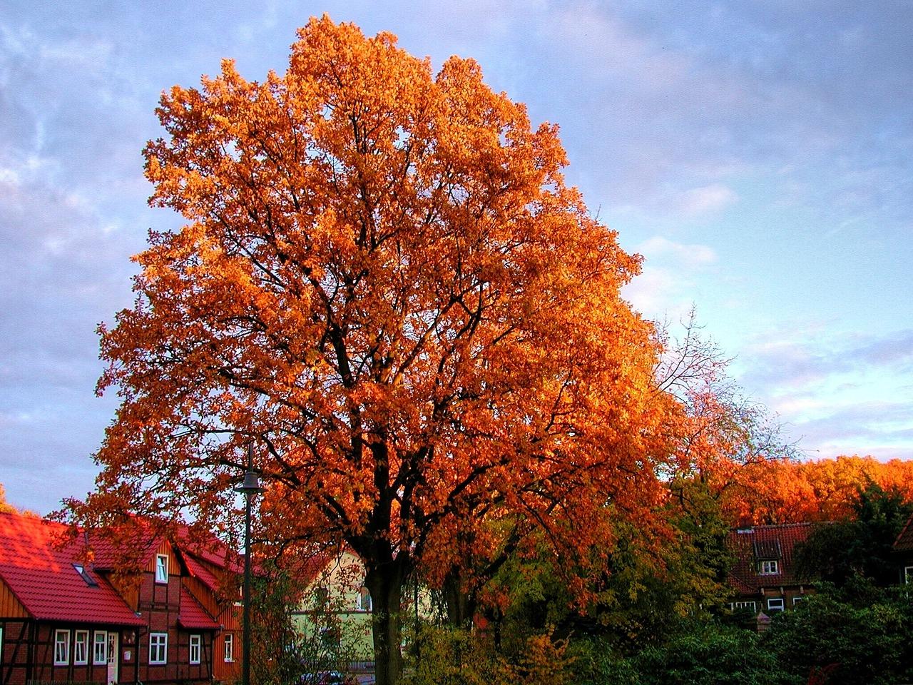 будут осенние деревья фото и названия акрила