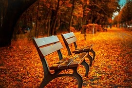 Bench, Fall, Park, Rest, Sit