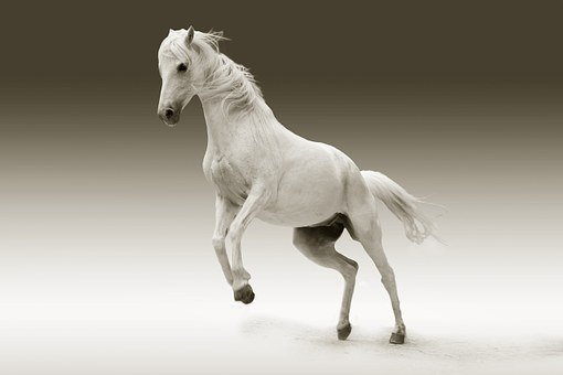 10 000 Free Horse Animal Images Pixabay Images, Photos, Reviews