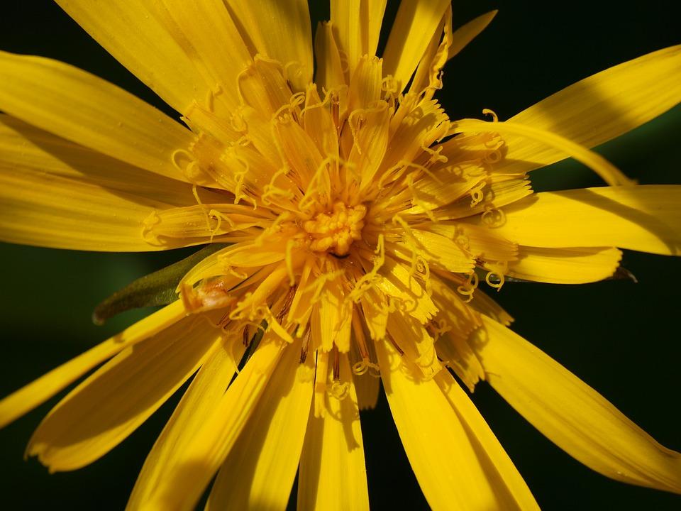 Fiori Alpini Gialli.Fiori Alpini Fiore Giallo Foto Gratis Su Pixabay