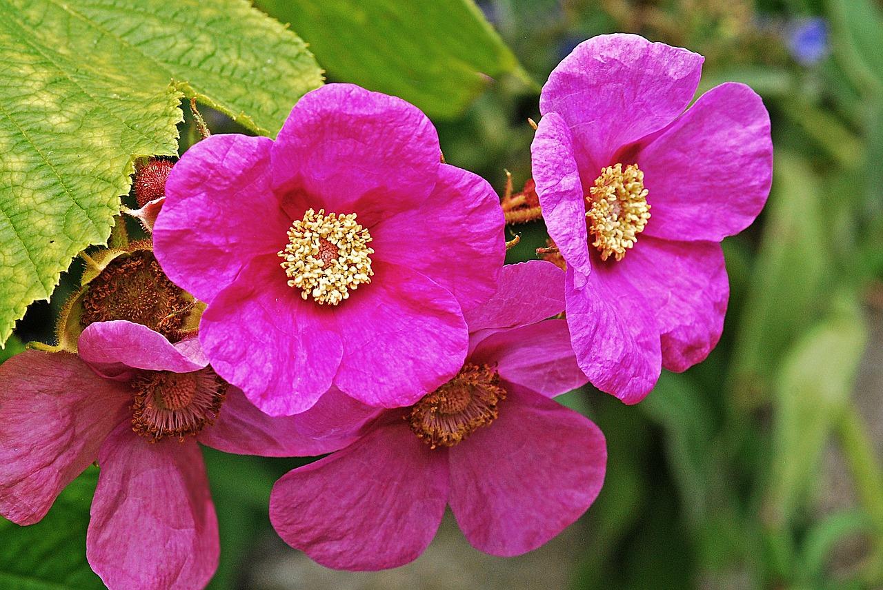 цветок малины фото тихомирова биография, фильмография