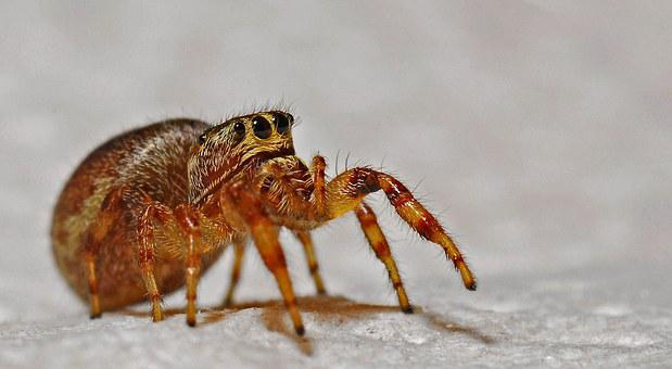 Spider, Arachnid, Macro, Insect, Animal