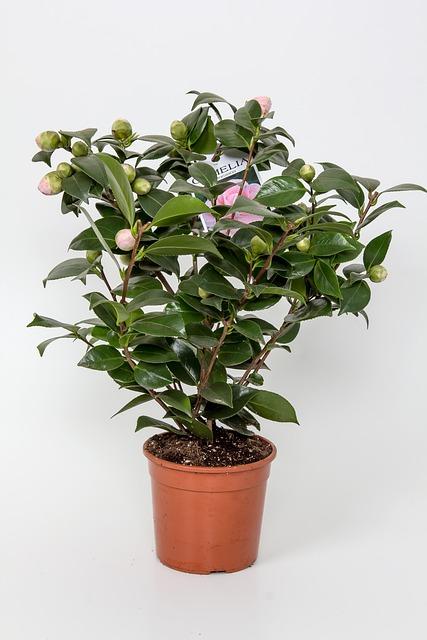 free photo  blumenstock  flowerpot - free image on pixabay