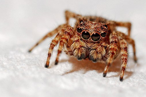 Spider, Macro, Insect, Arachnid, Nature