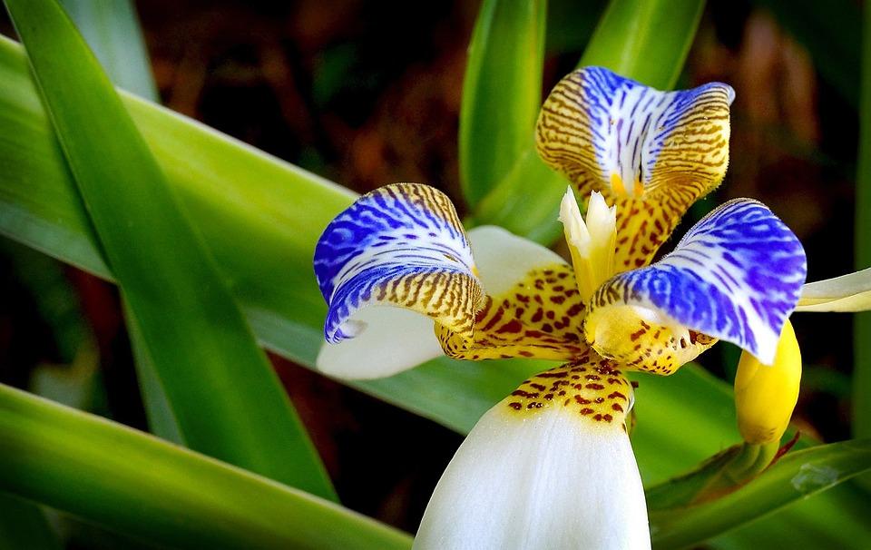 Orchidée Fleur Jardin Plante · Photo gratuite sur Pixabay
