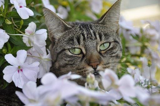 Kitty laying in a bed of flowers