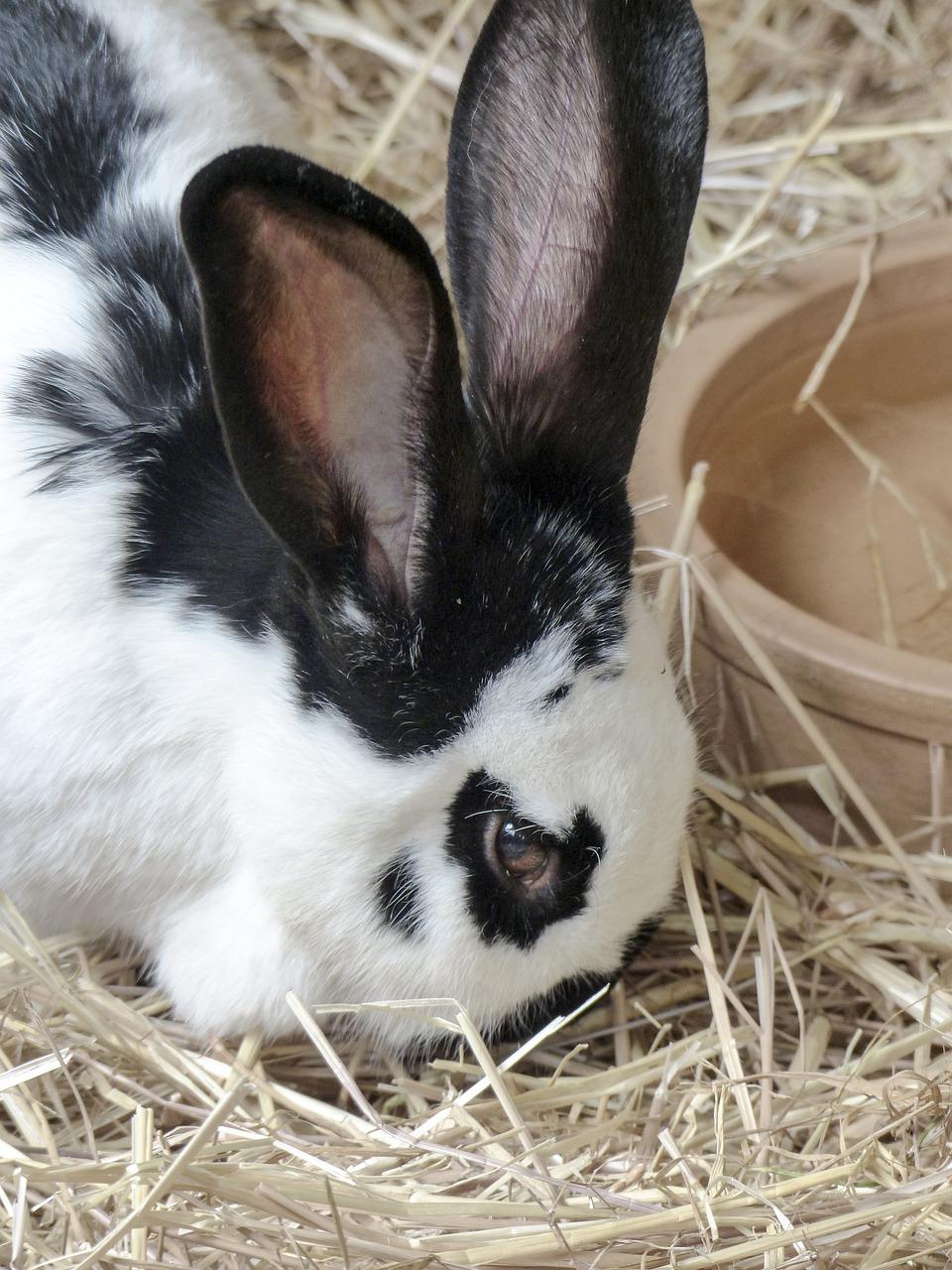 梦见自己逮住一只兔子 梦见抓野兔子是什么预兆