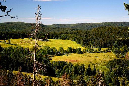 Šumava, Krajina, Příroda, Lesy