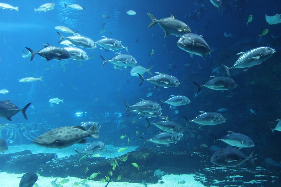 Free photo aquarium ocean park fish free image on - Poisson shark aquarium ...