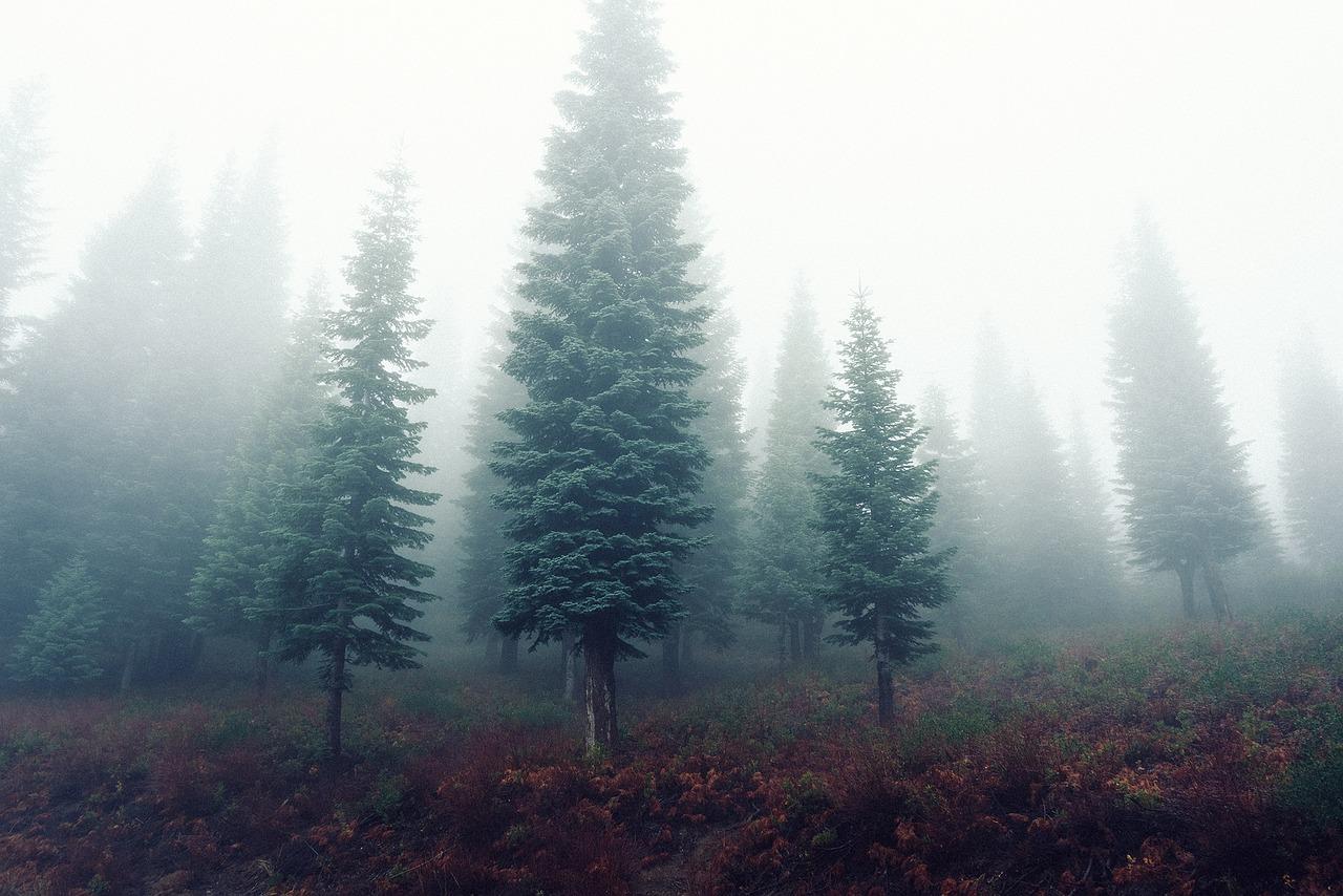 Путанный Лес