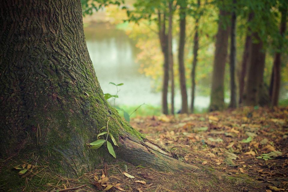 Леса в Толочинском районе открыты для посещения
