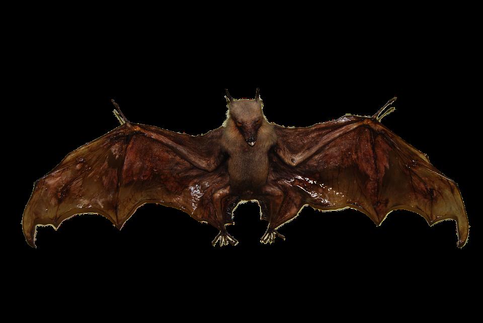 how to make a bat bird