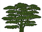 tree, awareness, meditation