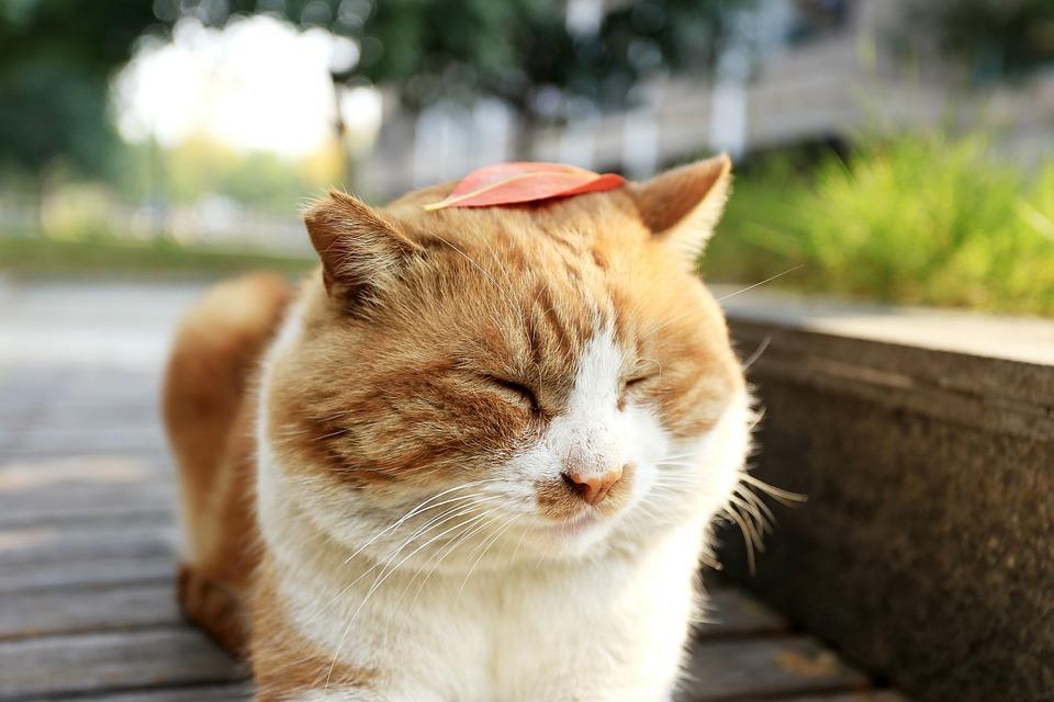 Čerstvé malé kočička